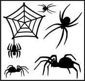 spider-wall-graphic-kit.jpg