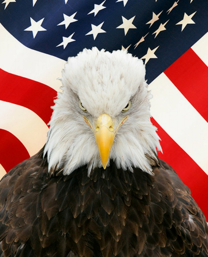 Bald Eagle With Flag Digital Vinyl Decal Sticker Custom